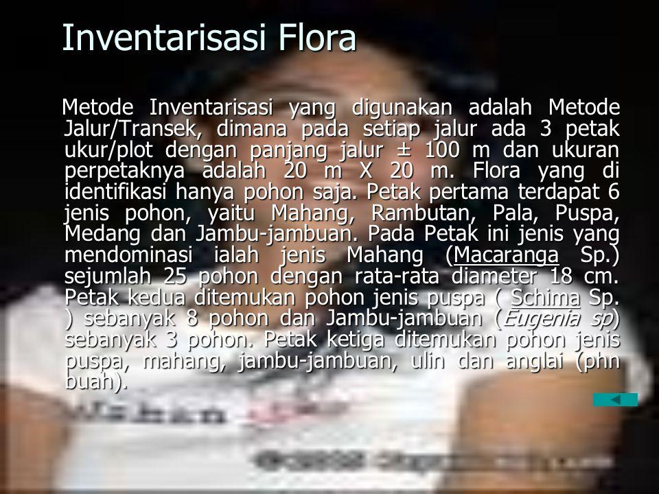 Inventarisasi Flora Metode Inventarisasi yang digunakan adalah Metode Jalur/Transek, dimana pada setiap jalur ada 3 petak ukur/plot dengan panjang jal