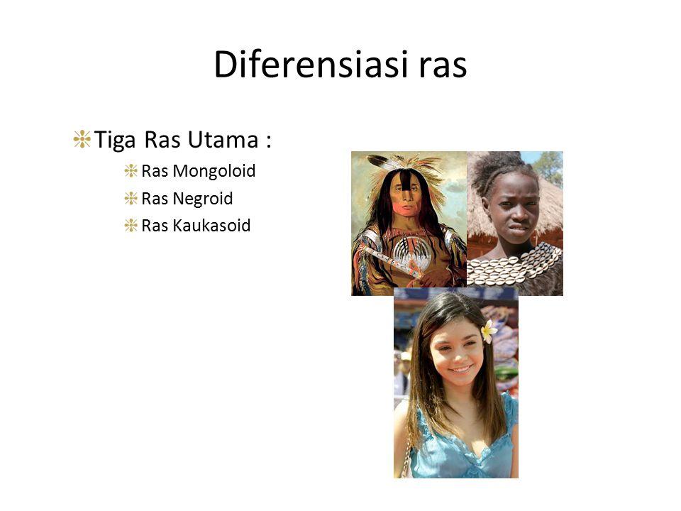 Diferensiasi ras Tiga Ras Utama : Ras Mongoloid Ras Negroid Ras Kaukasoid