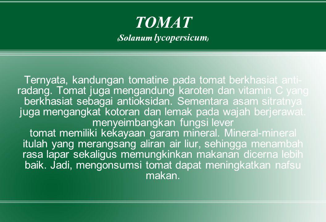 TOMAT ( Solanum lycopersicum ) Ternyata, kandungan tomatine pada tomat berkhasiat anti- radang. Tomat juga mengandung karoten dan vitamin C yang berkh