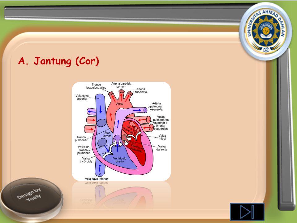 Alat-alat peredaran Darah terdiri dari: A. Jantung (heart/cor) B. Pembuluh darah (pembuluh darah vena /pembuluh darah balik dan pembuluh darah arteri