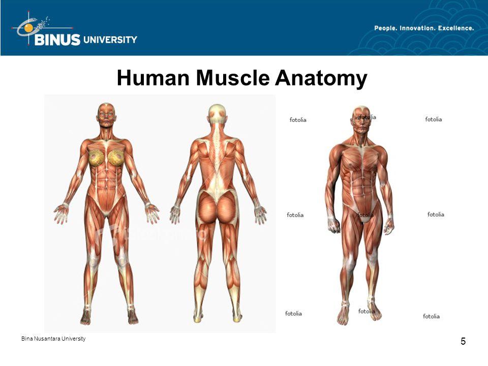 Bina Nusantara University 16 Back Body
