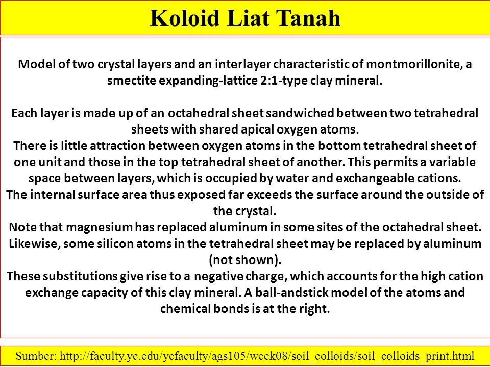 Koloid Liat Tanah Model of two crystal layers and an interlayer characteristic of montmorillonite, a smectite expanding-lattice 2:1-type clay mineral.