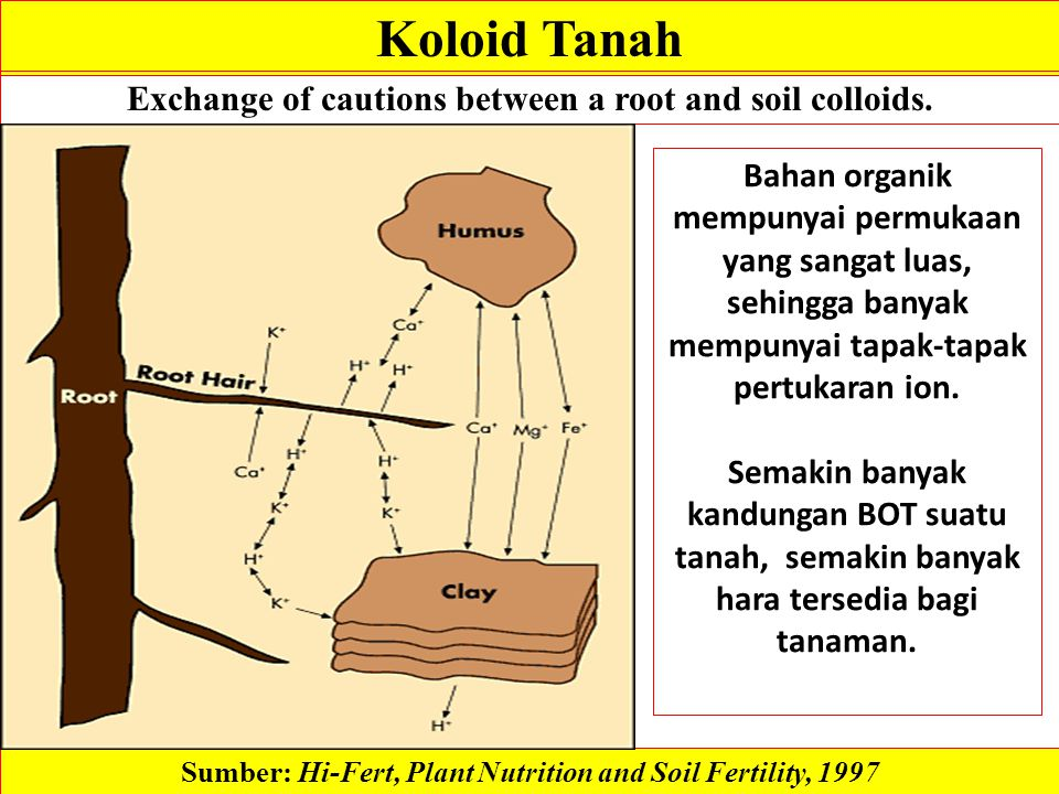 Koloid Tanah Exchange of cautions between a root and soil colloids. Sumber: Hi-Fert, Plant Nutrition and Soil Fertility, 1997 Bahan organik mempunyai