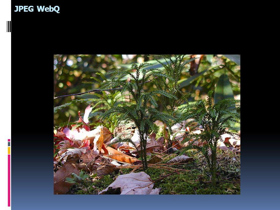 JPEG WebQ