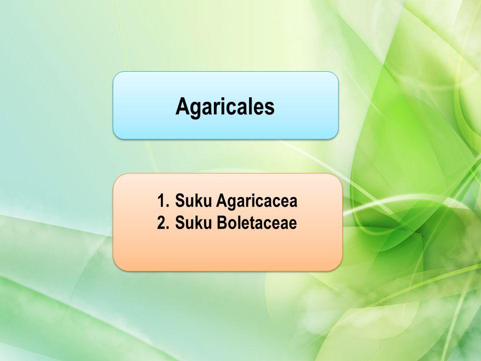 Agaricales 1.Suku AgaricaceaSuku Agaricacea 2.Suku BoletaceaeSuku Boletaceae 1.Suku AgaricaceaSuku Agaricacea 2.Suku BoletaceaeSuku Boletaceae