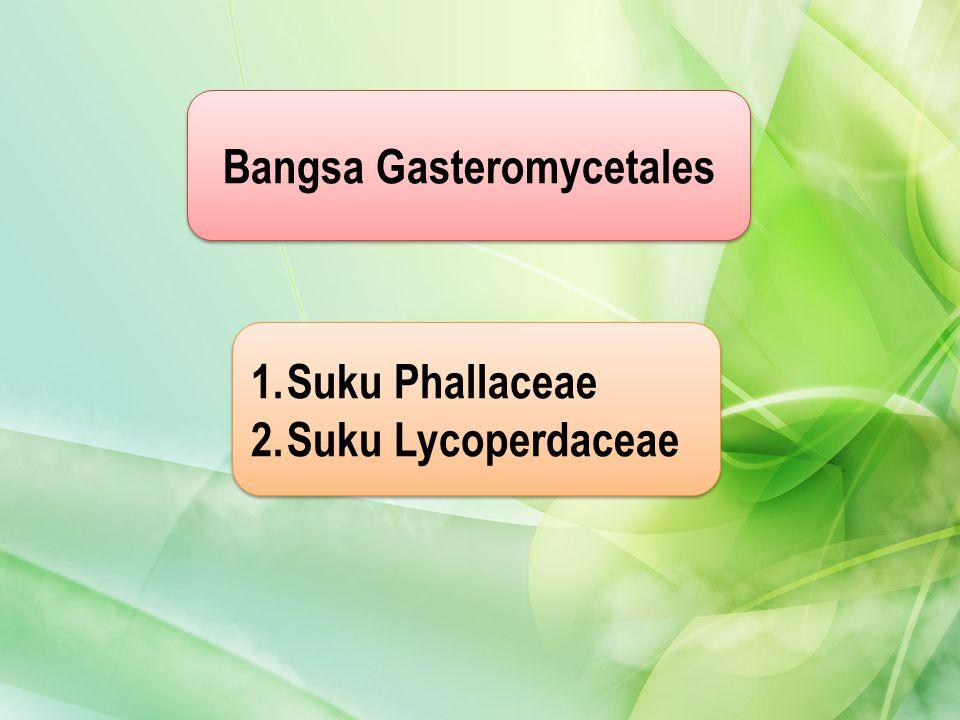 Bangsa Gasteromycetales 1.Suku PhallaceaeSuku Phallaceae 2.Suku LycoperdaceaeSuku Lycoperdaceae 1.Suku PhallaceaeSuku Phallaceae 2.Suku LycoperdaceaeS