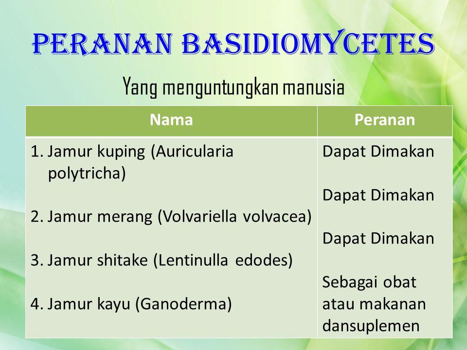 Peranan Basidiomycetes Yang menguntungkan manusia NamaPeranan 1.Jamur kuping (Auricularia polytricha) 2.Jamur merang (Volvariella volvacea) 3.Jamur sh