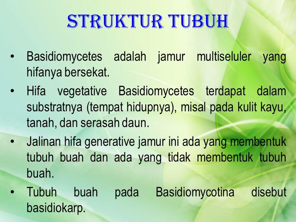 Struktur Tubuh Basidiomycetes adalah jamur multiseluler yang hifanya bersekat. Hifa vegetative Basidiomycetes terdapat dalam substratnya (tempat hidup
