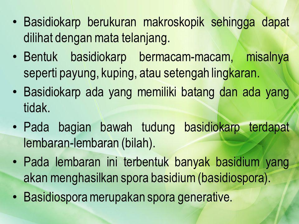 Suku Hydnaceae : Hydnum helveolum dan Hydnum repandum