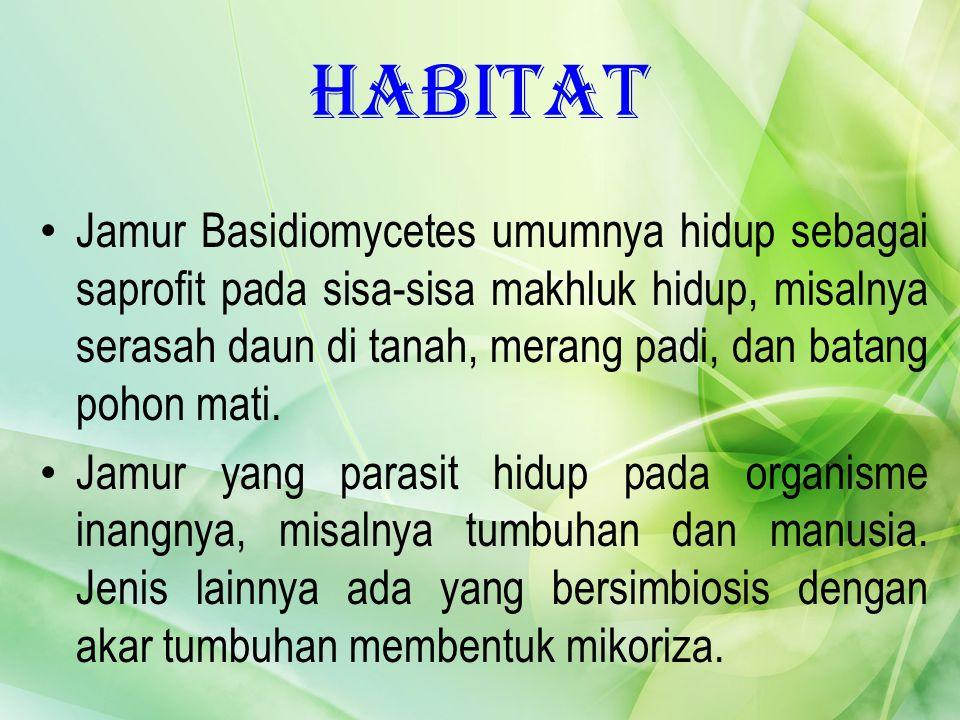 Habitat Jamur Basidiomycetes umumnya hidup sebagai saprofit pada sisa-sisa makhluk hidup, misalnya serasah daun di tanah, merang padi, dan batang poho