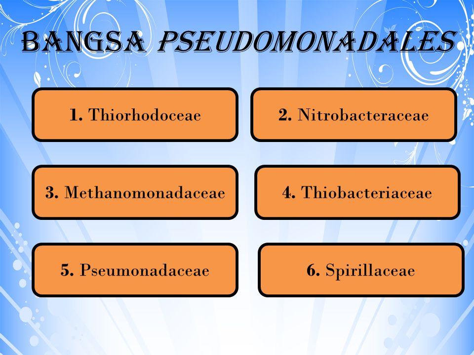 Bangsa Pseudomonadales 1. Thiorhodoceae2. Nitrobacteraceae 6. Spirillaceae 4. Thiobacteriaceae3. Methanomonadaceae 5. Pseumonadaceae