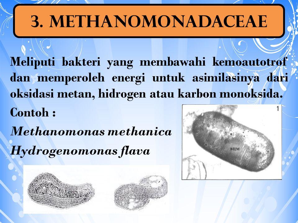 Meliputi bakteri yang membawahi kemoautotrof dan memperoleh energi untuk asimilasinya dari oksidasi metan, hidrogen atau karbon monoksida. Contoh : Me
