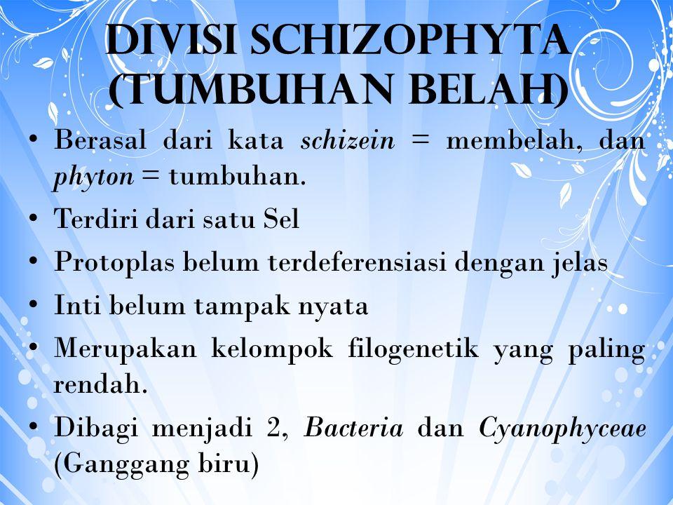 Divisi Schizophyta (Tumbuhan Belah) Berasal dari kata schizein = membelah, dan phyton = tumbuhan. Terdiri dari satu Sel Protoplas belum terdeferensias