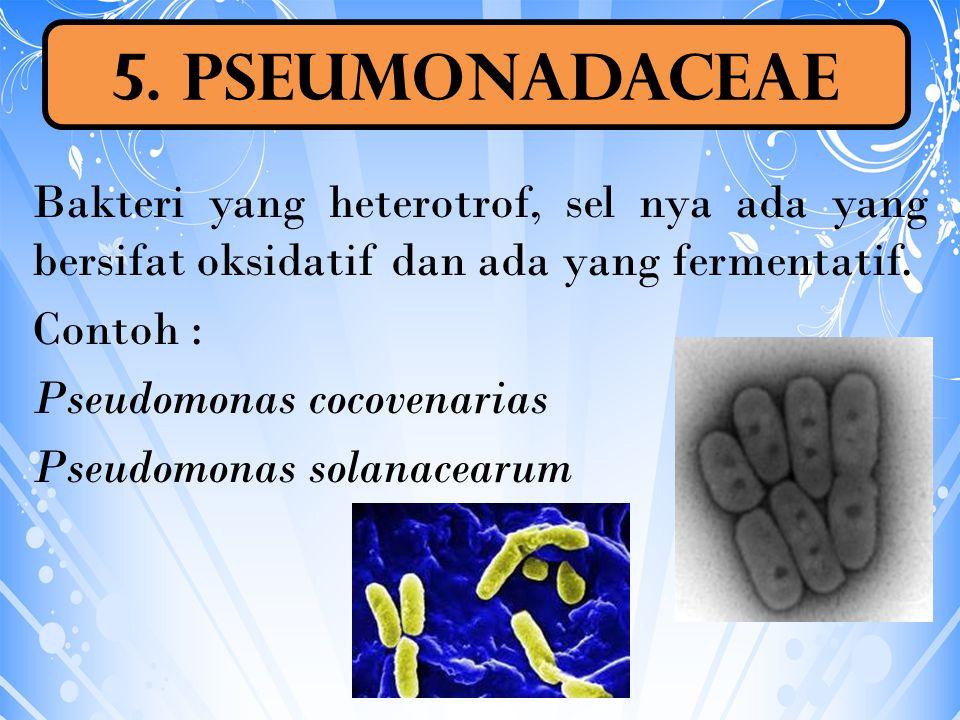 Bakteri yang heterotrof, sel nya ada yang bersifat oksidatif dan ada yang fermentatif. Contoh : Pseudomonas cocovenarias Pseudomonas solanacearum 5. P