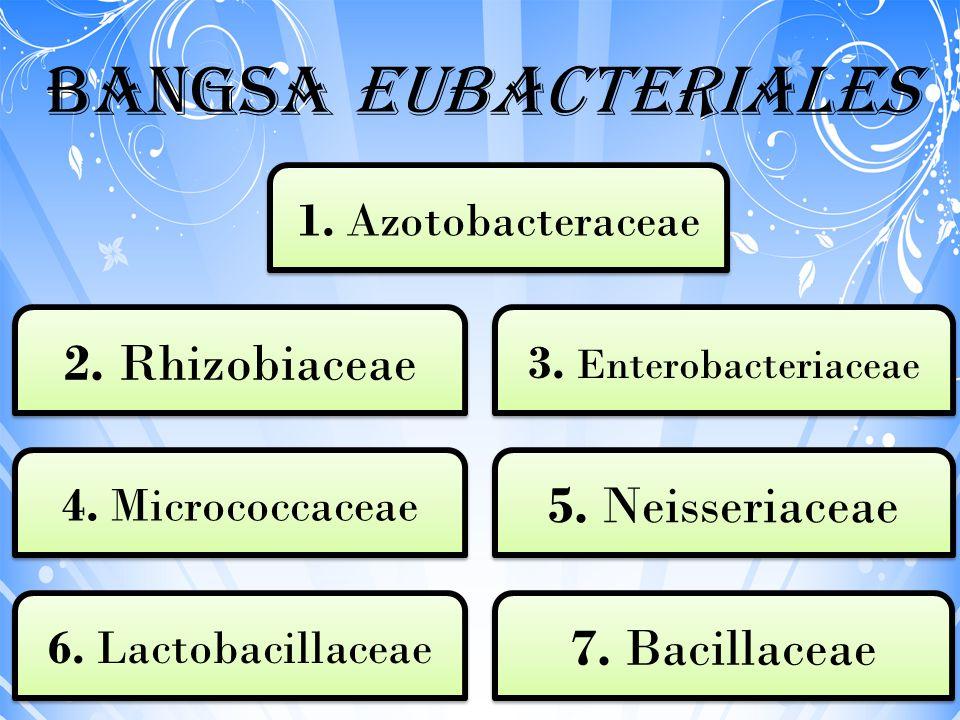 Bangsa Eubacteriales 7. Bacillaceae 6. Lactobacillaceae 1. Azotobacteraceae 3. Enterobacteriaceae 2. Rhizobiaceae 5. Neisseriaceae 4. Micrococcaceae