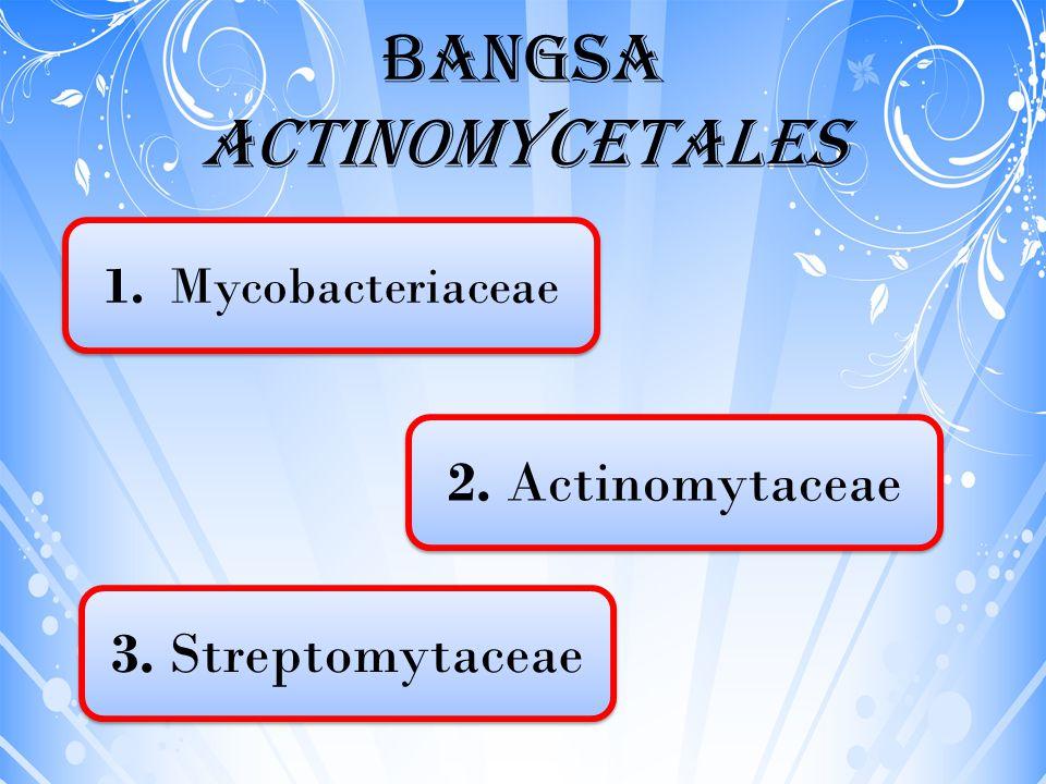 Bangsa Actinomycetales 1. Mycobacteriaceae 3. Streptomytaceae 2. Actinomytaceae