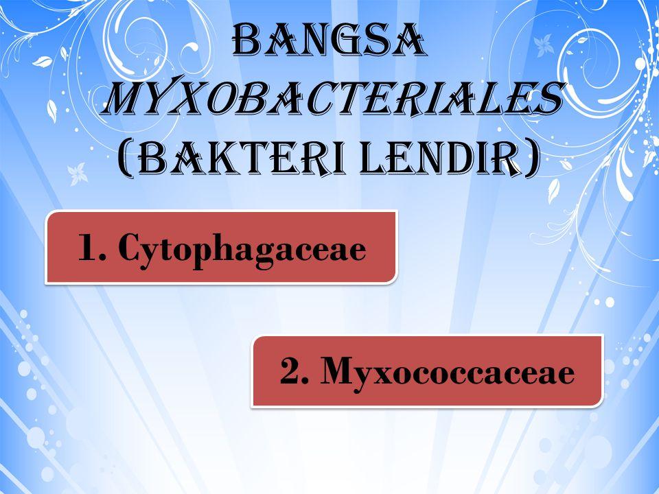 Bangsa Myxobacteriales (Bakteri lendir) 1. Cytophagaceae 2. Myxococcaceae