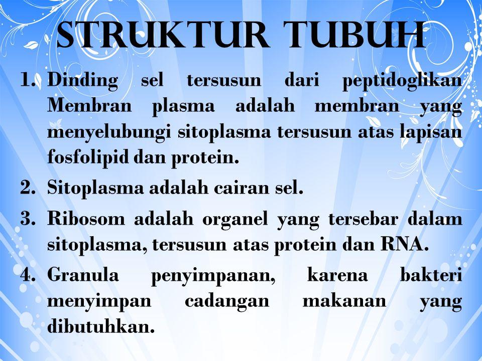 STRUKTUR TAMBAHAN BAKTERI 1.Kapsul atau lapisan lendir 2.Flagelum atau bulu cambuk 3.Pilus dan fimbria 4.Klorosom 5.Vakuola gas 6.Endospora