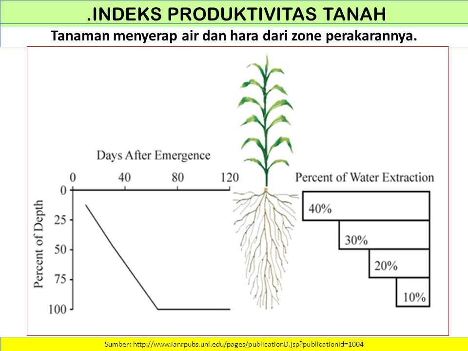 .INDEKS PRODUKTIVITAS TANAH Sumber: http://www.ianrpubs.unl.edu/pages/publicationD.jsp?publicationId=1004 Tanaman menyerap air dan hara dari zone pera