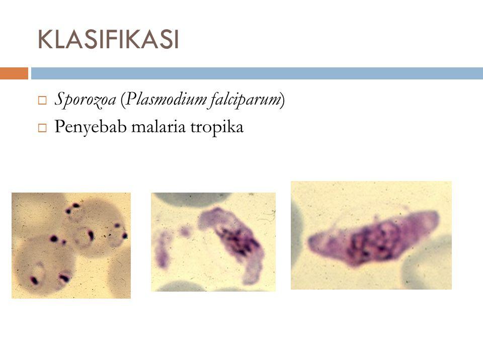  Sporozoa (Plasmodium falciparum)  Penyebab malaria tropika KLASIFIKASI