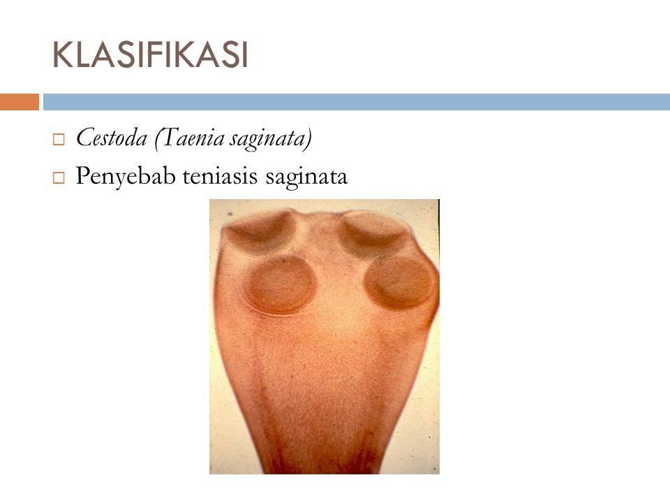  Cestoda (Taenia saginata)  Penyebab teniasis saginata KLASIFIKASI