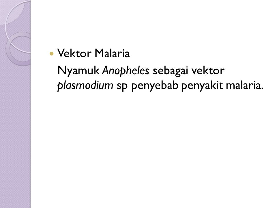 Vektor Malaria Nyamuk Anopheles sebagai vektor plasmodium sp penyebab penyakit malaria.