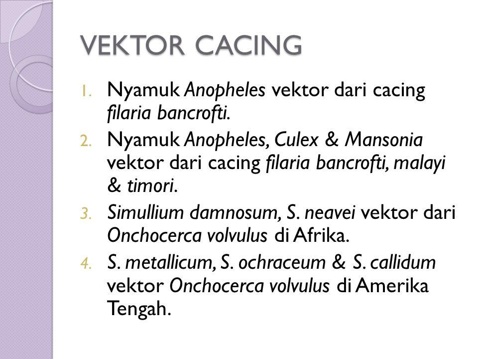 VEKTOR CACING 1. Nyamuk Anopheles vektor dari cacing filaria bancrofti.