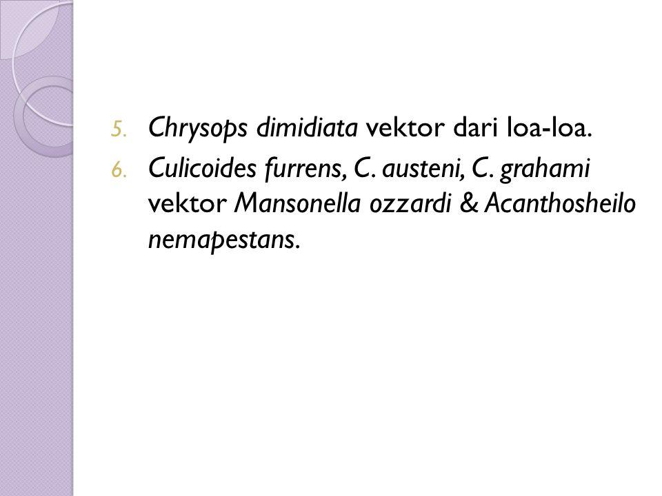 5. Chrysops dimidiata vektor dari loa-loa. 6. Culicoides furrens, C.