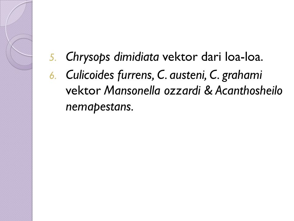 5. Chrysops dimidiata vektor dari loa-loa. 6. Culicoides furrens, C. austeni, C. grahami vektor Mansonella ozzardi & Acanthosheilo nemapestans.