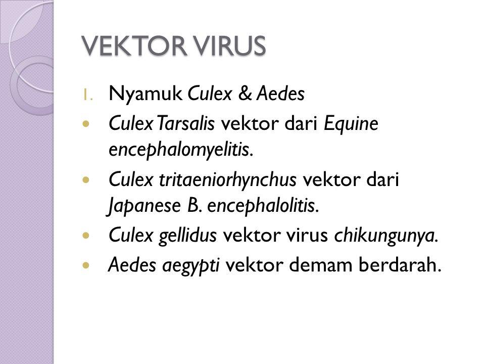 VEKTOR VIRUS 1. Nyamuk Culex & Aedes Culex Tarsalis vektor dari Equine encephalomyelitis.