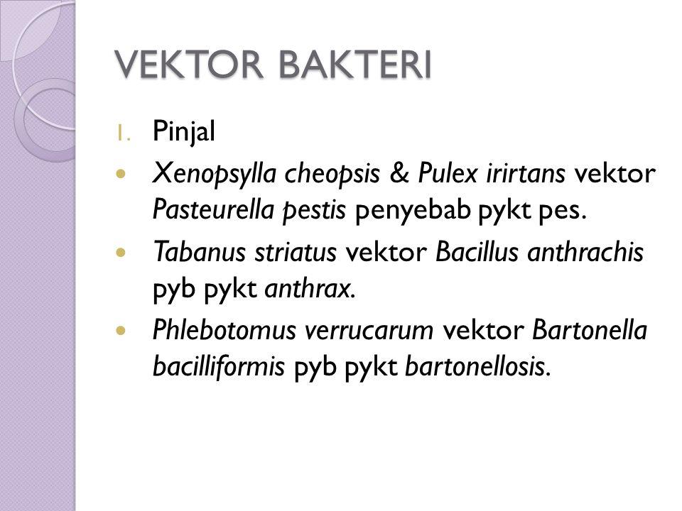 VEKTOR BAKTERI 1.