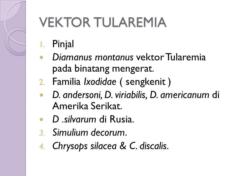 VEKTOR TULAREMIA 1. Pinjal Diamanus montanus vektor Tularemia pada binatang mengerat.