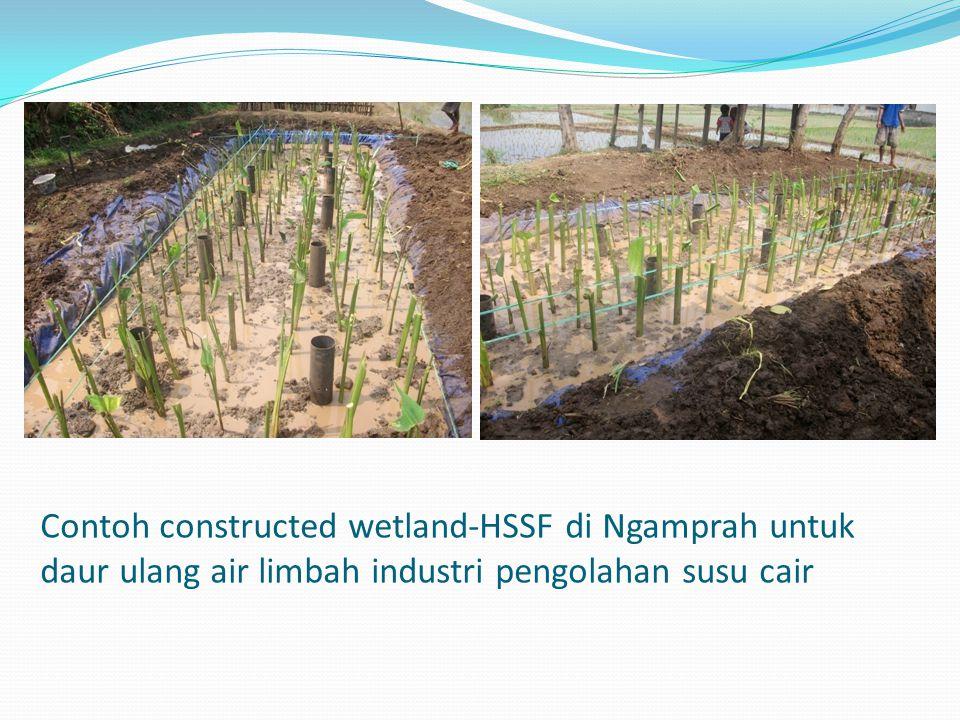 Contoh constructed wetland-HSSF di Ngamprah untuk daur ulang air limbah industri pengolahan susu cair
