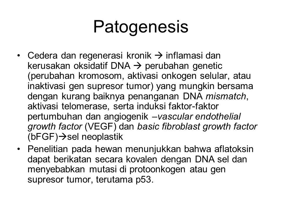 Patogenesis Cedera dan regenerasi kronik  inflamasi dan kerusakan oksidatif DNA  perubahan genetic (perubahan kromosom, aktivasi onkogen selular, at