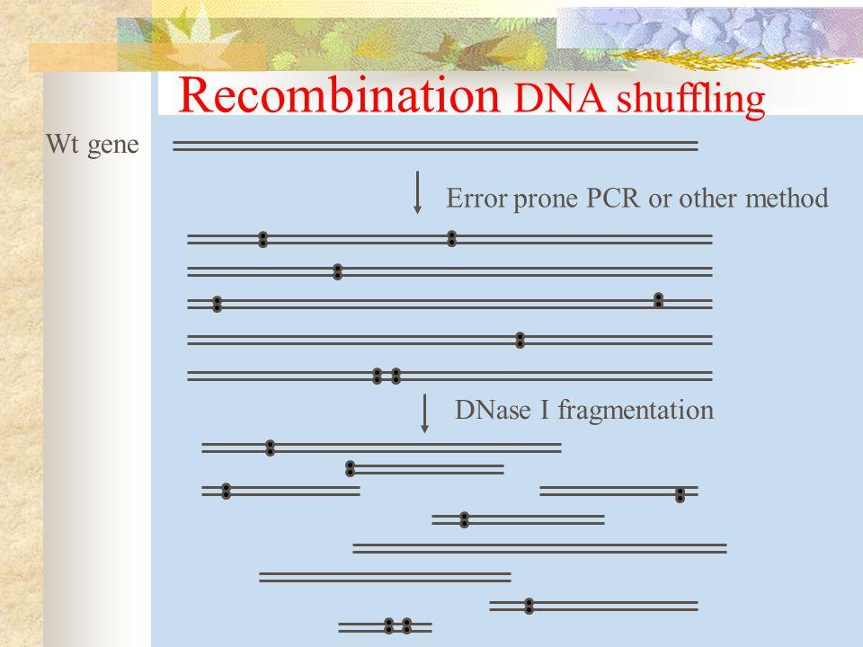 Recombination DNA shuffling Wt gene Error prone PCR or other method DNase I fragmentation