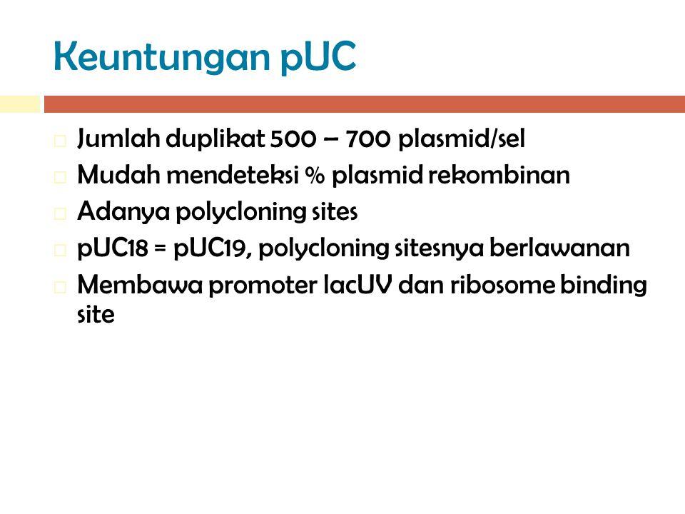 Keuntungan pUC  Jumlah duplikat 500 – 700 plasmid/sel  Mudah mendeteksi % plasmid rekombinan  Adanya polycloning sites  pUC18 = pUC19, polycloning