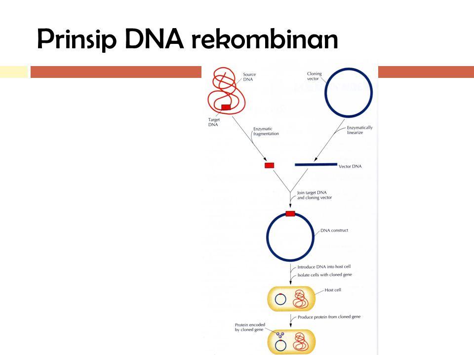 Prinsip DNA rekombinan