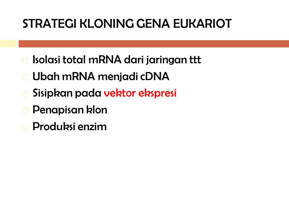 STRATEGI KLONING GENA EUKARIOT  Isolasi total mRNA dari jaringan ttt  Ubah mRNA menjadi cDNA  Sisipkan pada vektor ekspresi  Penapisan klon  Prod