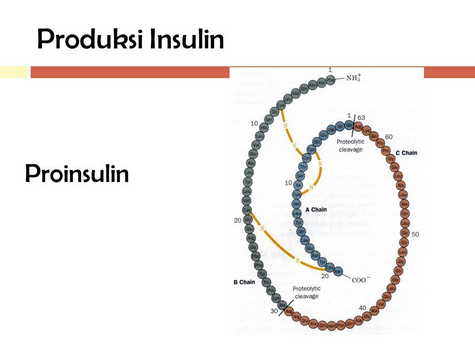 Produksi Insulin Proinsulin