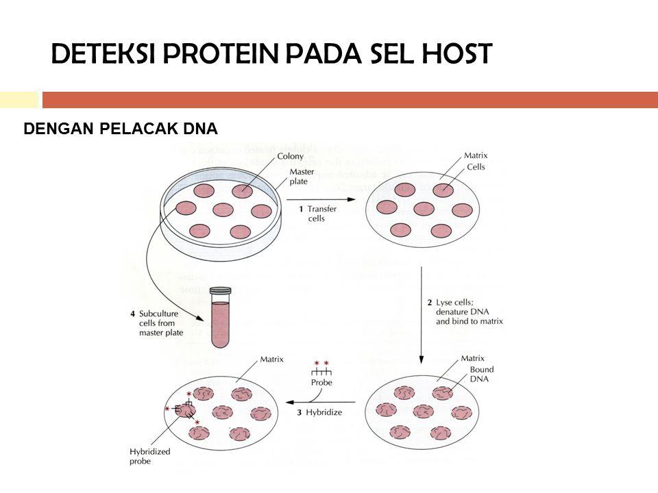 DETEKSI PROTEIN PADA SEL HOST DENGAN PELACAK DNA