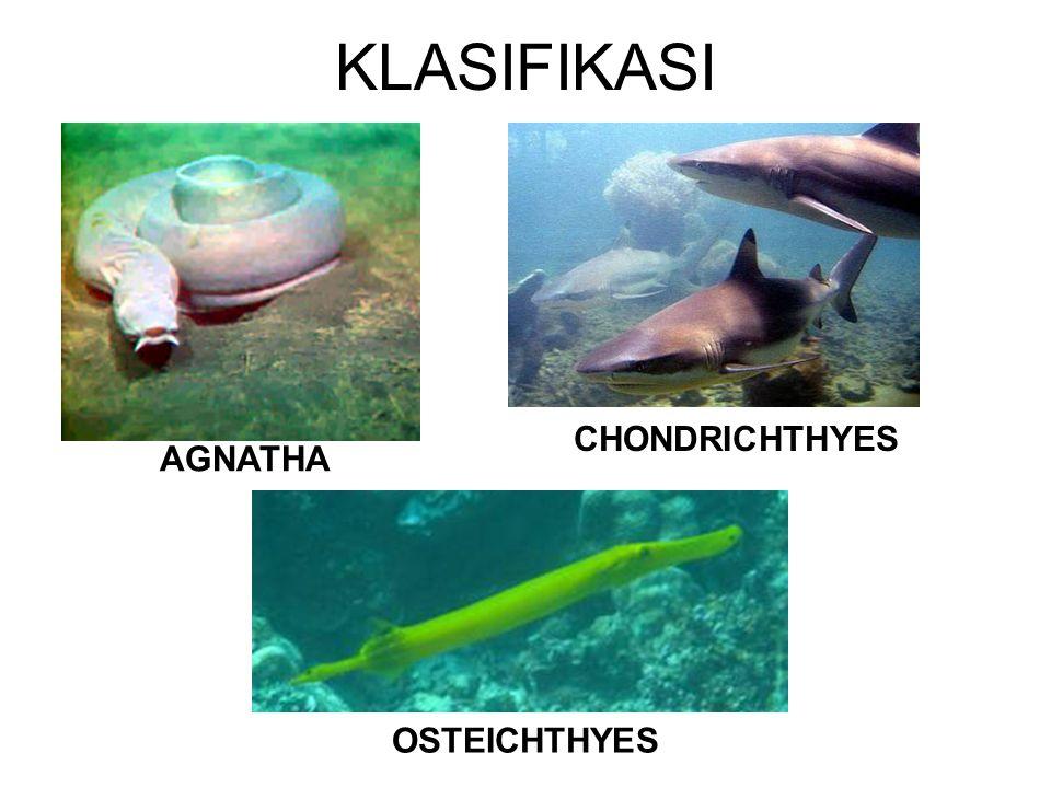 KLASIFIKASI AGNATHA CHONDRICHTHYES OSTEICHTHYES