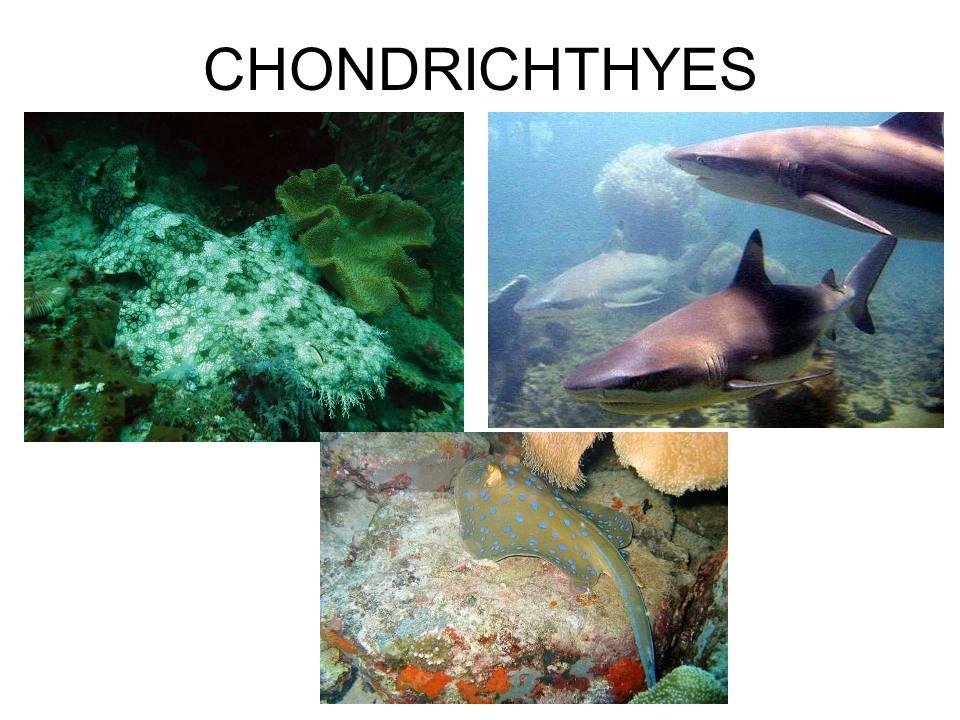 Indera pada Ikan Cahaya (photoreception) Bahan kimia (chemoreception) Getaran (mechanoreception) Listrik (electroreception)