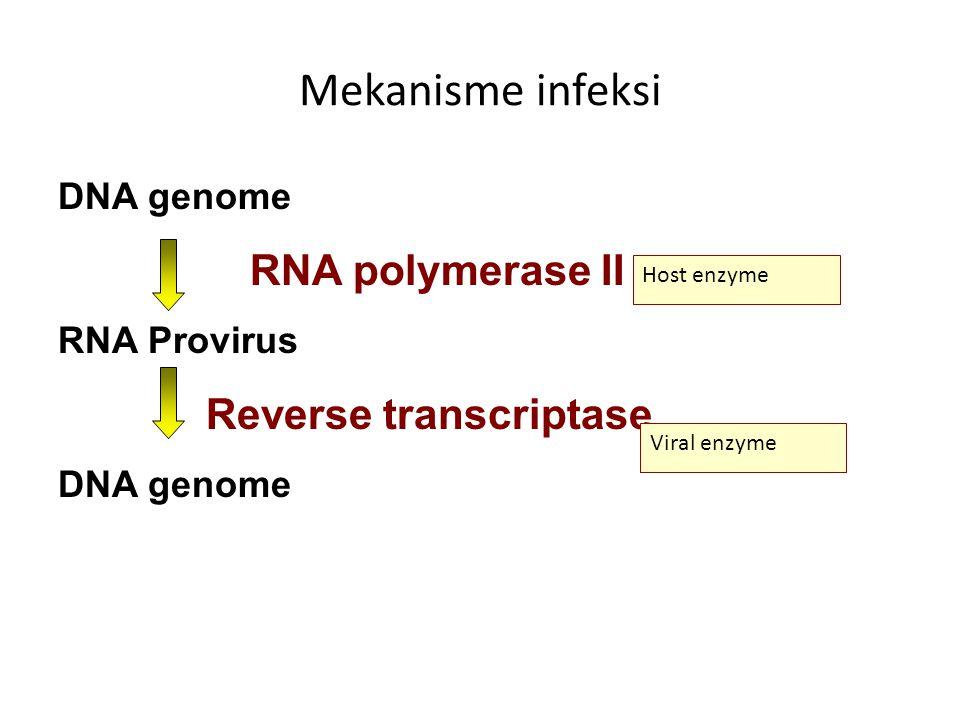 Mekanisme infeksi DNA genome RNA polymerase II RNA Provirus Reverse transcriptase DNA genome Host enzyme Viral enzyme