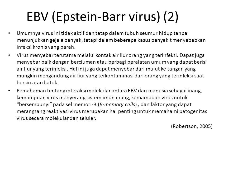 EBV (Epstein-Barr virus) (2) Umumnya virus ini tidak aktif dan tetap dalam tubuh seumur hidup tanpa menunjukkan gejala banyak, tetapi dalam beberapa kasus penyakit menyebabkan infeksi kronis yang parah.