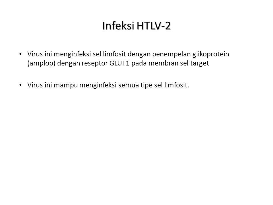 Infeksi HTLV-2 Virus ini menginfeksi sel limfosit dengan penempelan glikoprotein (amplop) dengan reseptor GLUT1 pada membran sel target Virus ini mampu menginfeksi semua tipe sel limfosit.