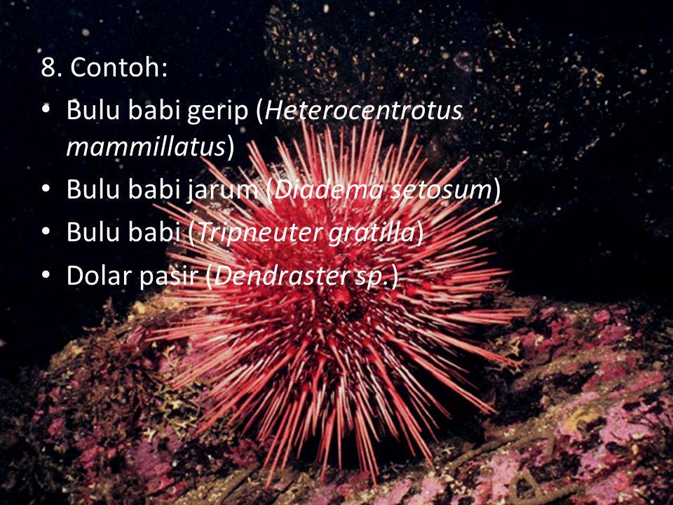 5. Habitat : daerah pantai, atas batu karang, dasar laut, dalam lumpur, sumur-sumuran daerah pantai, muara sungai (dengan membenamkan diri di tanah li
