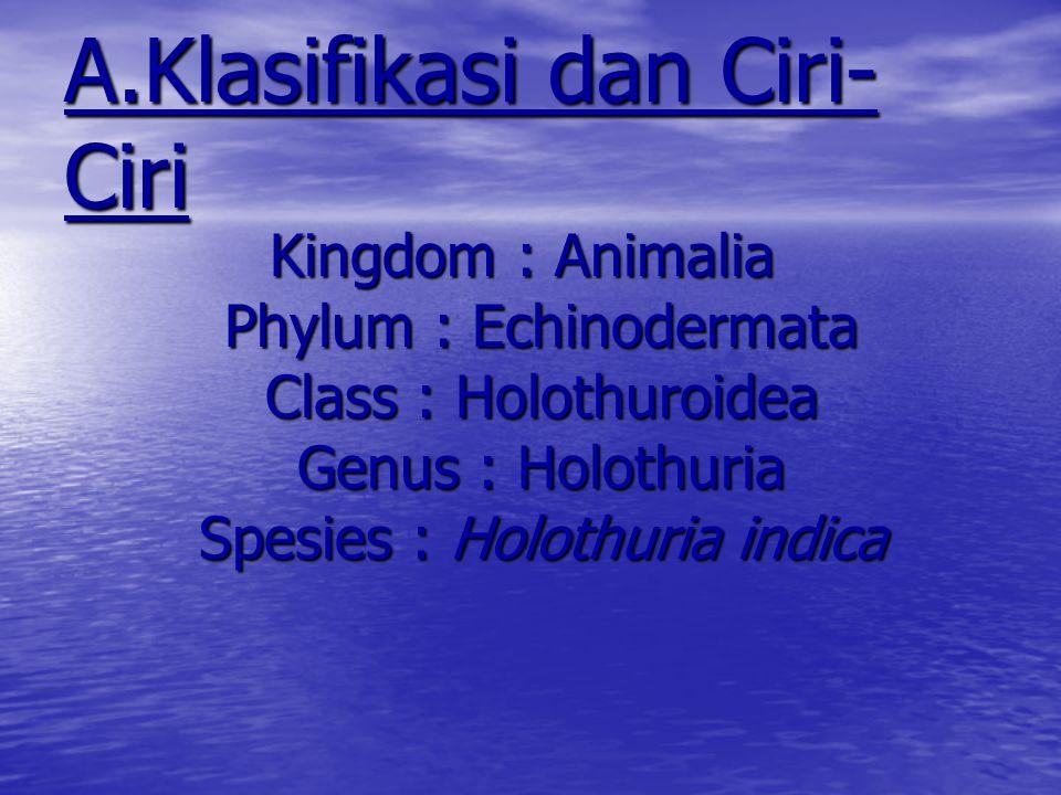 Holothuroidea (Teripang) sea cucumbers atau holothurians