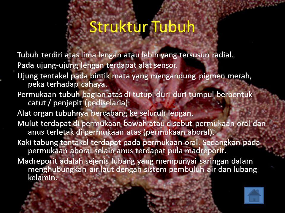 Struktur tubuh Sistem organ Reproduksi