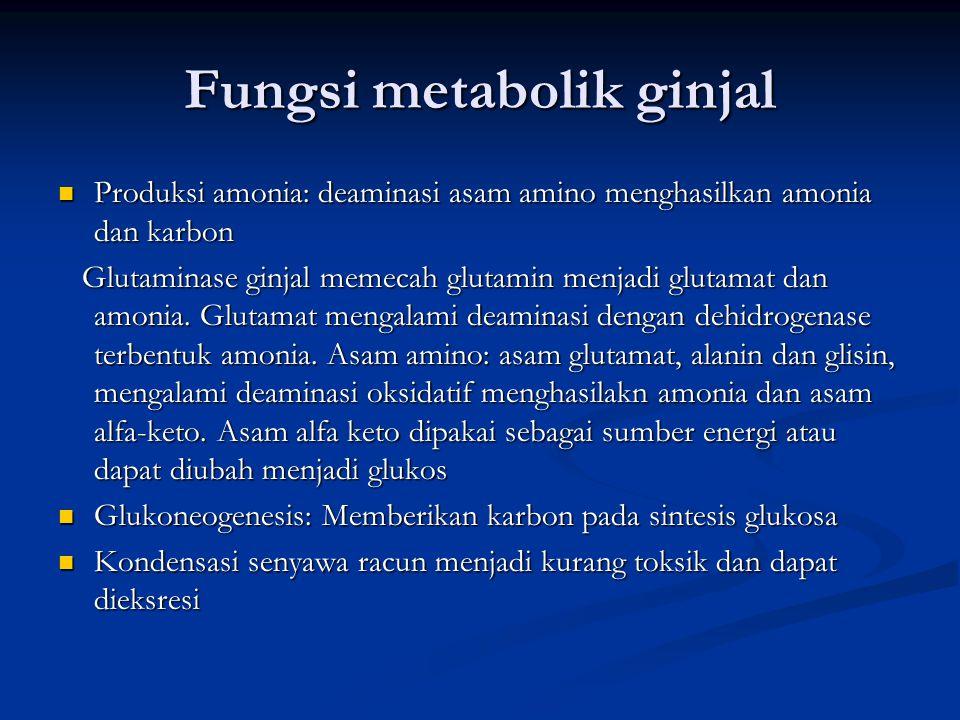 Fungsi metabolik ginjal Produksi amonia: deaminasi asam amino menghasilkan amonia dan karbon Produksi amonia: deaminasi asam amino menghasilkan amonia