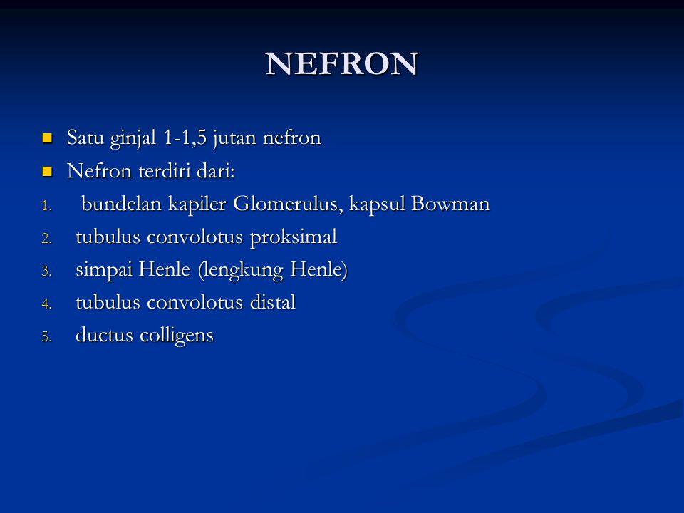 NEFRON Satu ginjal 1-1,5 jutan nefron Satu ginjal 1-1,5 jutan nefron Nefron terdiri dari: Nefron terdiri dari: 1. bundelan kapiler Glomerulus, kapsul